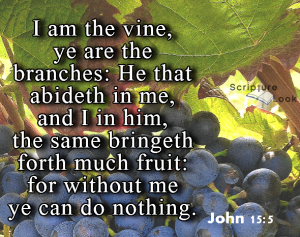 I am the vine, ye are the branches; he that abideth in me and I in him the same bringeth forth much fruit: for without me you can do nothing. John 15:5