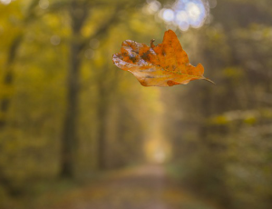 Surrender as a leaf that falls by God's command.
